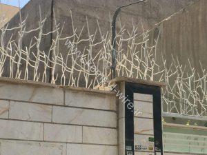 حصار شاخ گوزنی